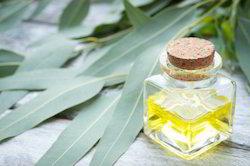 Eucalyptus Oil 99%