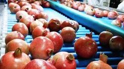 Pomegranate Grading, Sorting and Packing Machine(Electronic)
