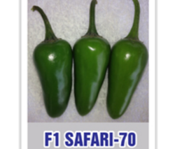 Chilli Seed - Wholesale Price & Mandi Rate for Chilli Seed