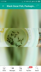 black oscar fish, Packaging Type: Packet, Packaging Size: 3cm