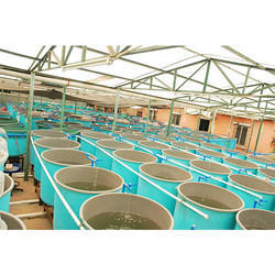 Ras Breeding Hatchery