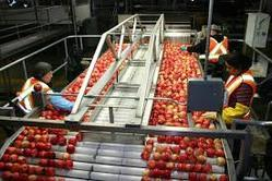 Apple Processing Project Reports