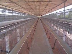 Broiler Breeder Poultry Cages