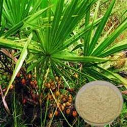 Saw Palmetto Extract 45%