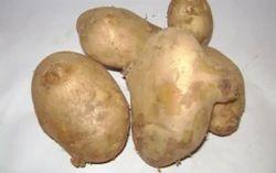 Brown Fresh Potato