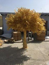 Golden Ficus Tree