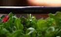 Watering Drip System