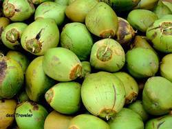 Tender Coconut Fresh Green Coconut