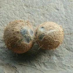 Black Husked Coconut