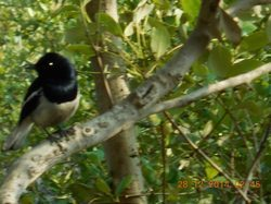 3 Nights 4 Days Sundarban Tour Service