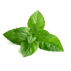Mint for Cold Storage Rental Services
