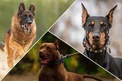 Pet Treatment Services, 100, Mode Of Treatment: Aniamls