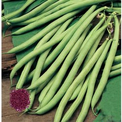 Open Pollinated Beans Seeds