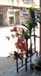 Indoor Plants In Ahmedabad À¤… À¤¦à¤° À¤°à¤–न À¤• À¤ª À¤§ À¤…हमद À¤¬ À¤¦ Latest Price Mandi Rates From Dealers In Ahmedabad