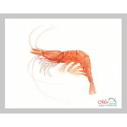 Shrimp - Wholesale Price & Mandi Rate for Live Shrimps