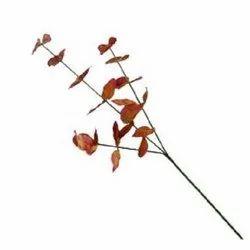 Eucalyptus Leaf Stick