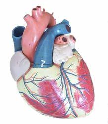 Jumboo Heart