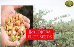 JJ03 Jojoba 25 Seed Packet, Pack Size: Small
