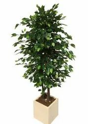 Artificial Ficus Trees