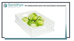 Vegetable Packaging PP Corrugated Box
