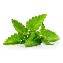 Peppermint Leaves (3-4%) Essential Oil