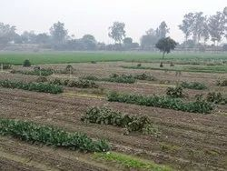 Delhi Organic Vegetables, Pesticide Free (for Raw Products)