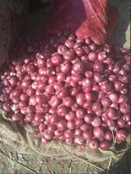 Fresh Red Onion 07