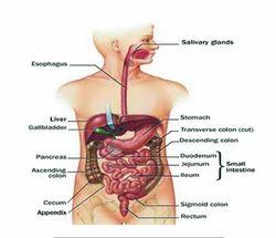 Gastro-intestinal Care Service