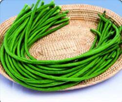 Yard Long Beans - Katrina