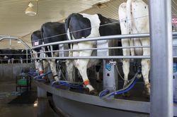 Rapiflow Milking Parlor