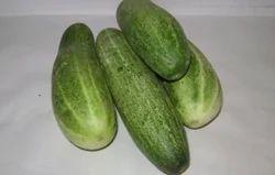 Green Fresh Cucumber
