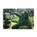 Bear Topiary Plants