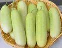 Cucumber Hybrid 7 White
