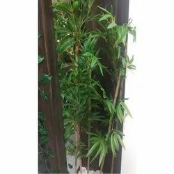 Bamboo Plants - Wholesaler & Wholesale Dealers in India