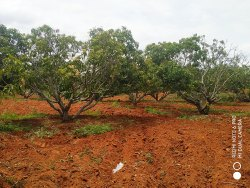 Farm Lands, Size/ Area: 110000 Sq.ft