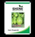 Shine Brand Seeds Hybrid Brinjal Seeds - F1 Opal, For Farming