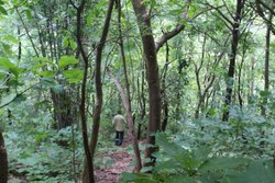 Polo Forest Trekking Camp