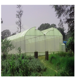 Agriculture Greenhouse