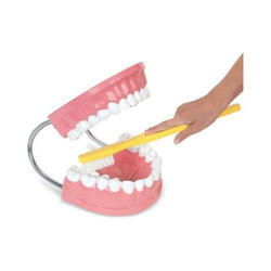Giant Dental Care with Toothbrush Model