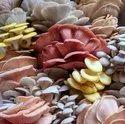 Coloured Mushroom Spawn