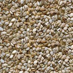White Natural Sesame Spices, Packaging Size: 1 Kg/ 20kg/ 40kg