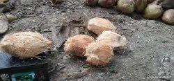 Ganganar Coconut'S, Packaging Size: 50 Kg