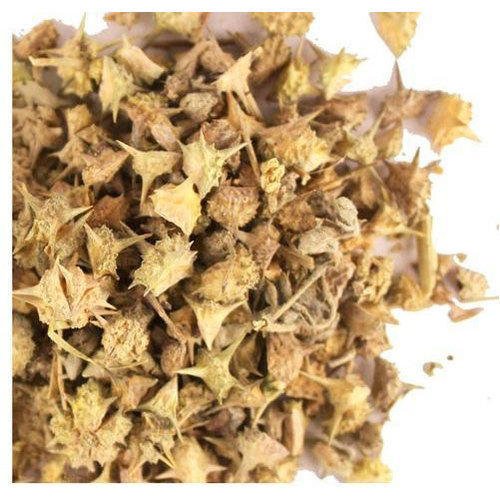 Dried Gokhru Seeds, Packaging: 10 to 15 kg