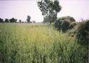 Rajasthani Henna Powder