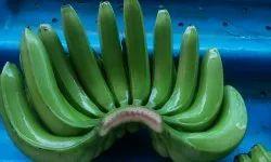 A Grade Cavendish Banana