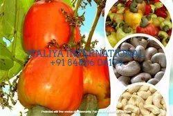 20 Kg Raw Cashew Nuts