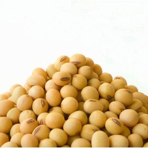 Organic Soybean, High in Protein, Rs 20 /kilogram Balaji & Company | ID:  12386567130