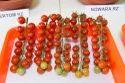 Cheramy Tomato Seeds