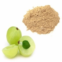 Amla Extract, Pack Size: 1 Kg To 25 Kg