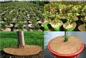 Coir Garden 10 Inch Coir Mulch Mat